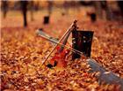 秋天唯美动态图片