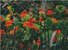唯美鲜花花丛动态图片