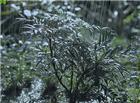 动态唯美下雨天图片