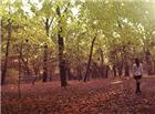 秋天落叶动态图片