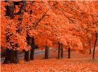 秋天红色枫叶林图片