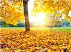 枫树落叶美景图片