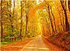 秋天枫叶小路图片