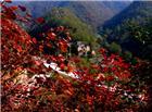 枫叶风景素材图片