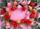 婚礼彩色玫瑰花请柬图片