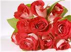 玫瑰花花束唯美图片