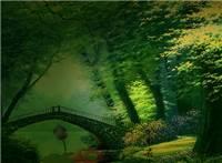 幽静唯美树林小桥动态图片